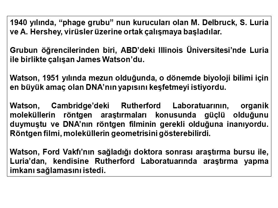 1940 yılında, phage grubu nun kurucuları olan M. Delbruck, S