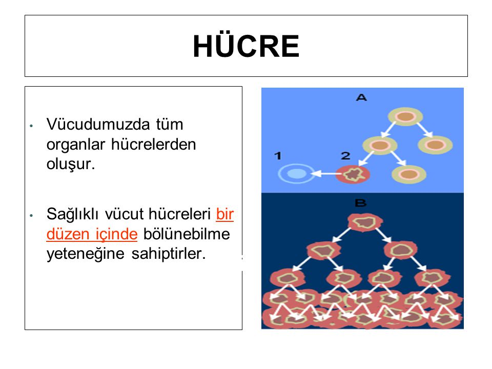 HÜCRE Hücreler vücudumuzun en küçük yapıtaşlarıdır.