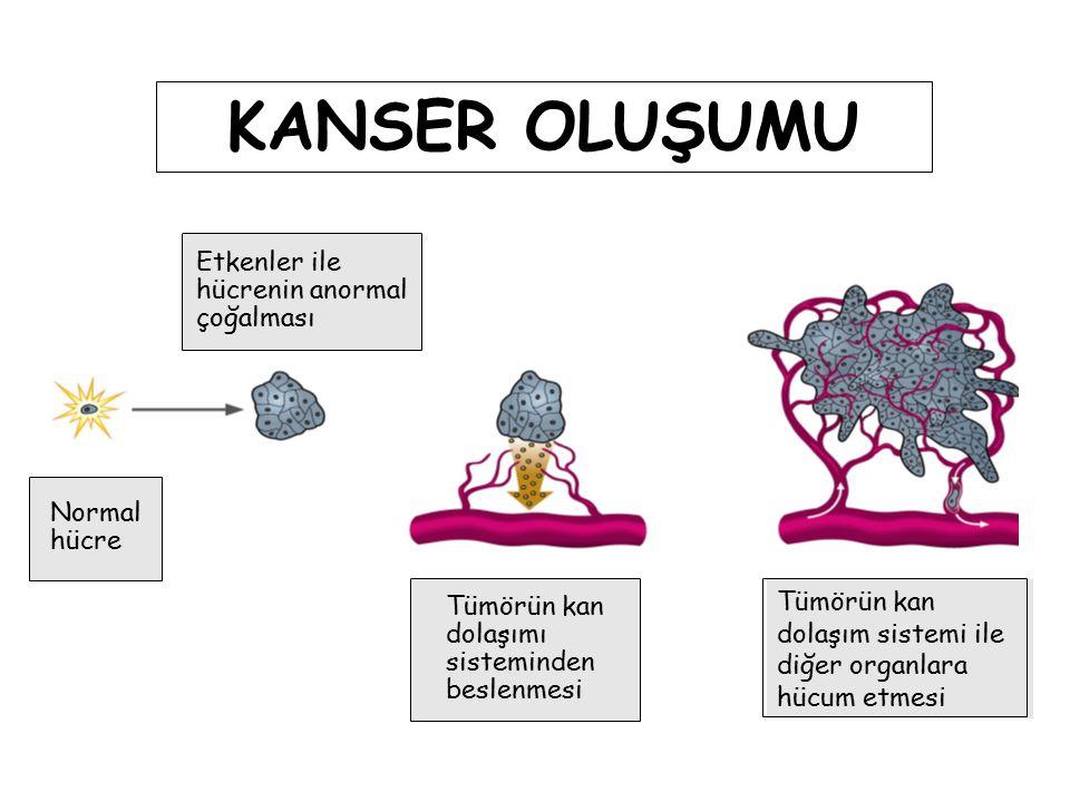 KANSER OLUŞUMU Etkenler ile hücrenin anormal çoğalması Normal hücre
