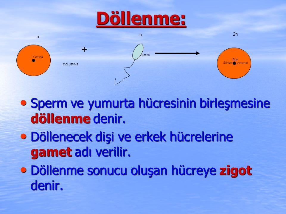 Döllenme: Sperm ve yumurta hücresinin birleşmesine döllenme denir.