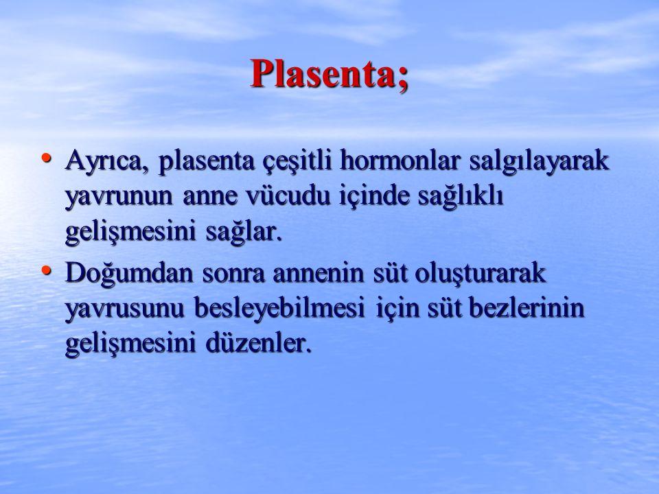 Plasenta; Ayrıca, plasenta çeşitli hormonlar salgılayarak yavrunun anne vücudu içinde sağlıklı gelişmesini sağlar.