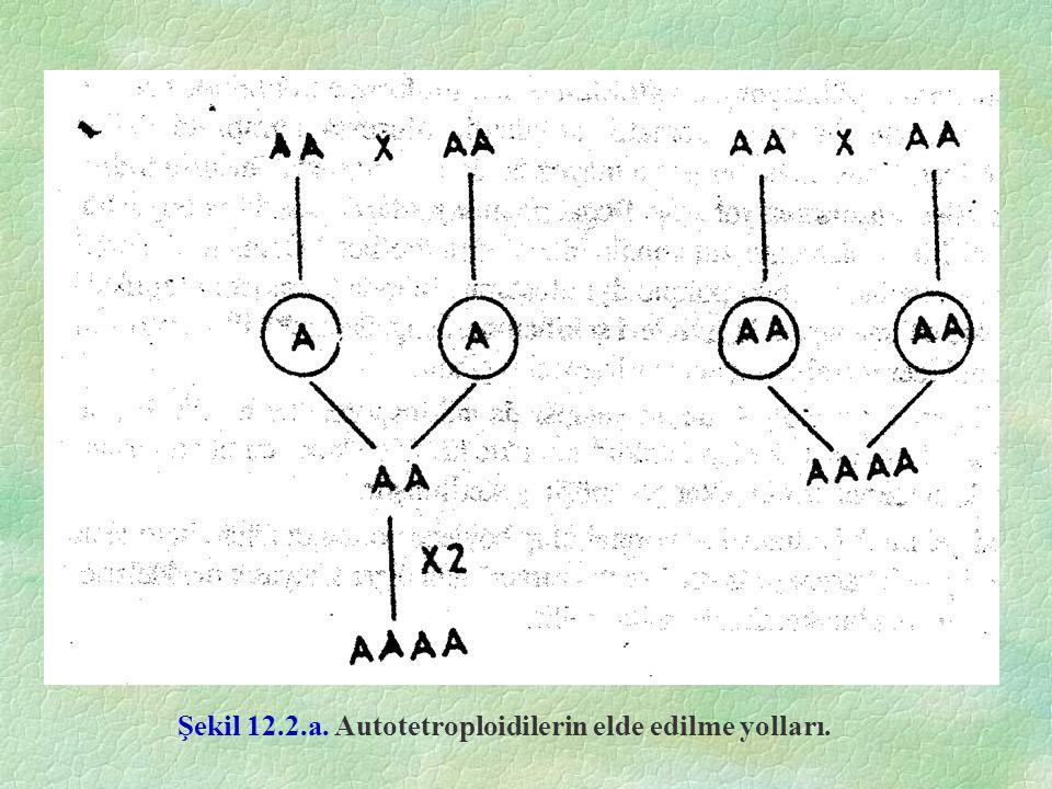 Şekil 12.2.a. Autotetroploidilerin elde edilme yolları.