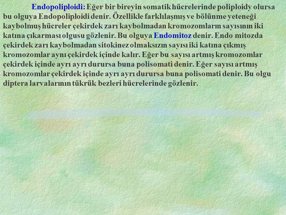 Endopoliploidi: Eğer bir bireyin somatik hücrelerinde poliploidy olursa bu olguya Endopoliploidi denir.