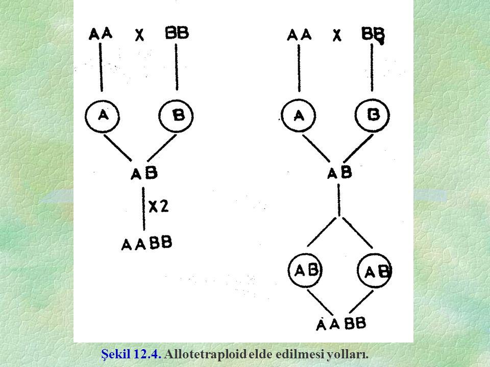 Şekil 12.4. Allotetraploid elde edilmesi yolları.