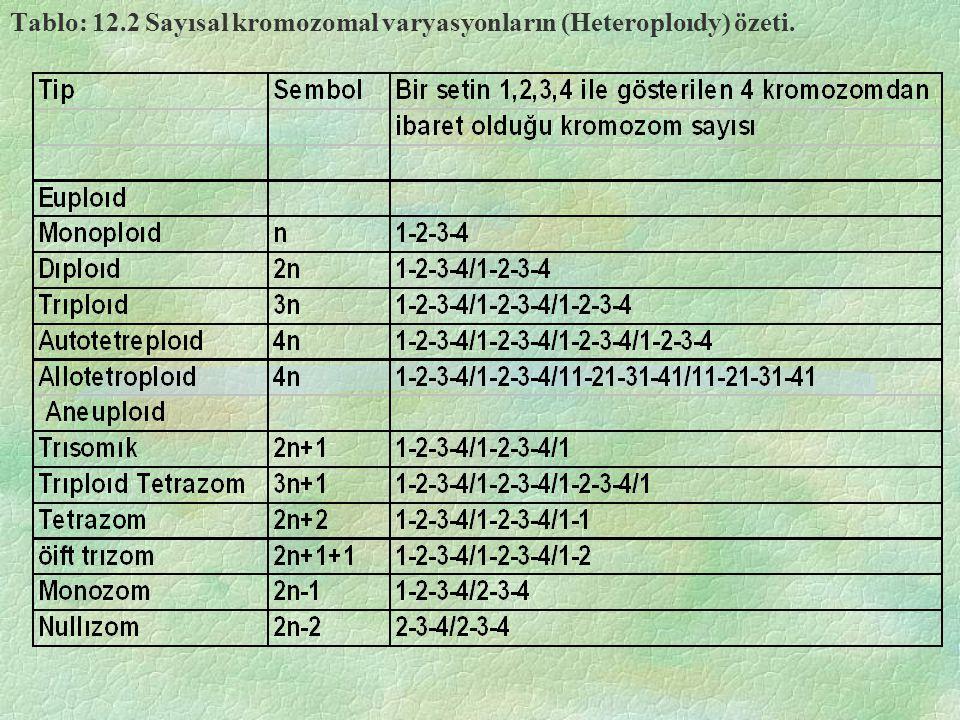 Tablo: 12.2 Sayısal kromozomal varyasyonların (Heteroploıdy) özeti.