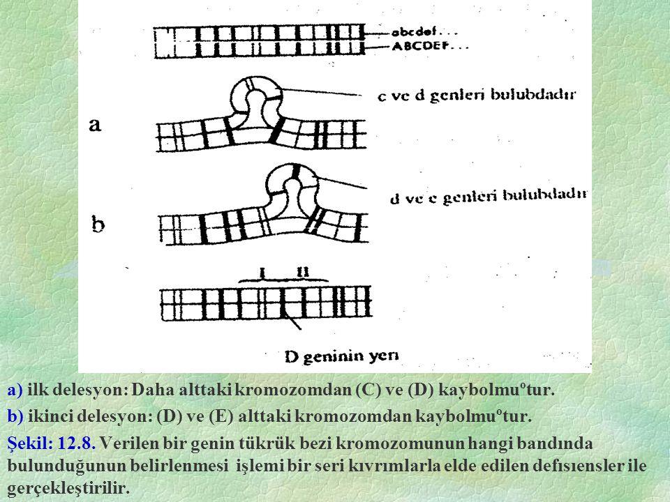 a) ilk delesyon: Daha alttaki kromozomdan (C) ve (D) kaybolmuºtur.