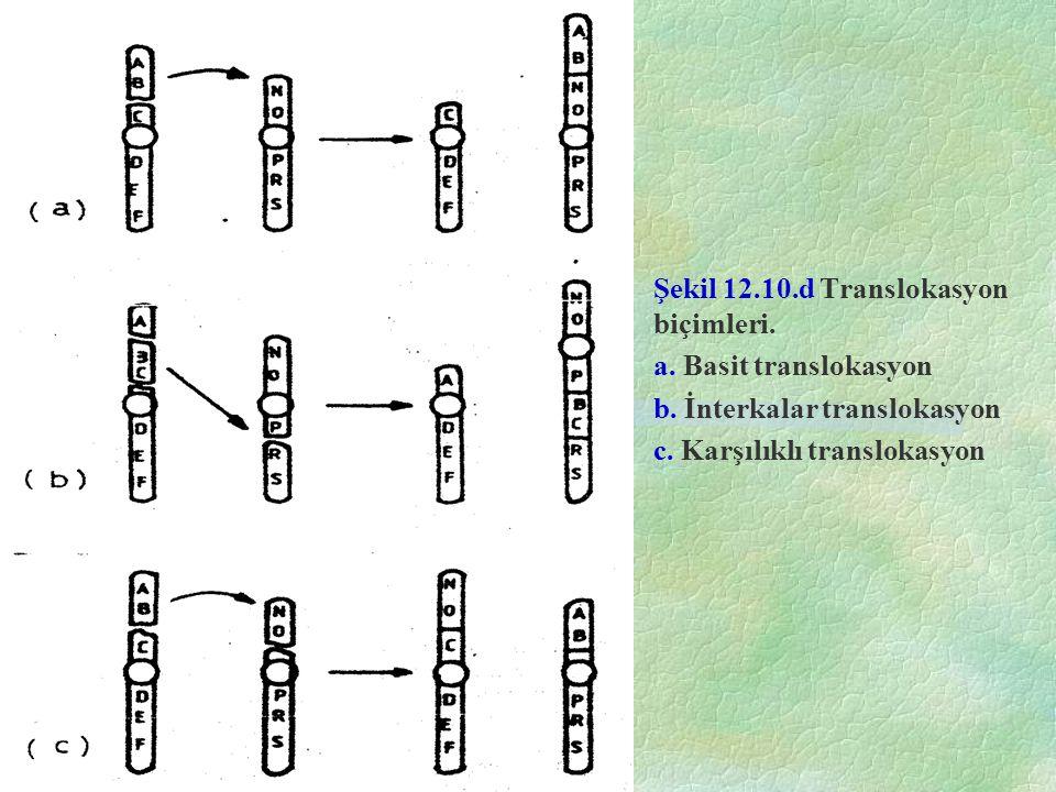 Şekil 12.10.d Translokasyon biçimleri.