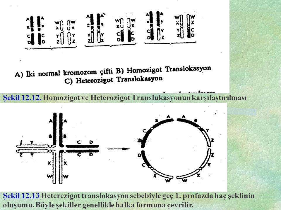 Şekil 12.12. Homozigot ve Heterozigot Translukasyonun karşılaştırılması