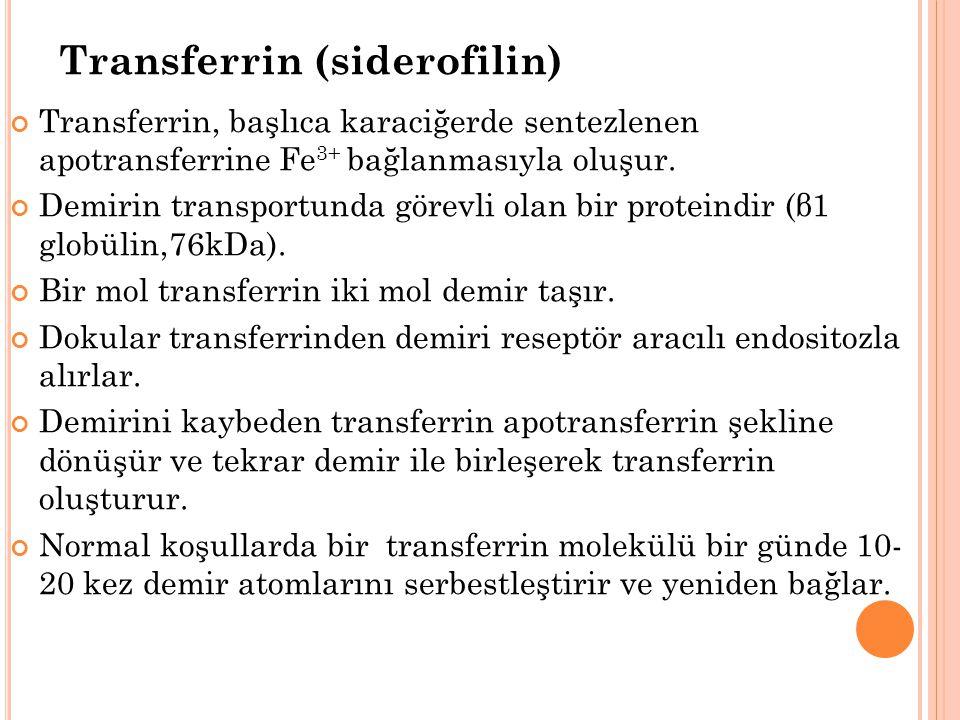 Transferrin (siderofilin)
