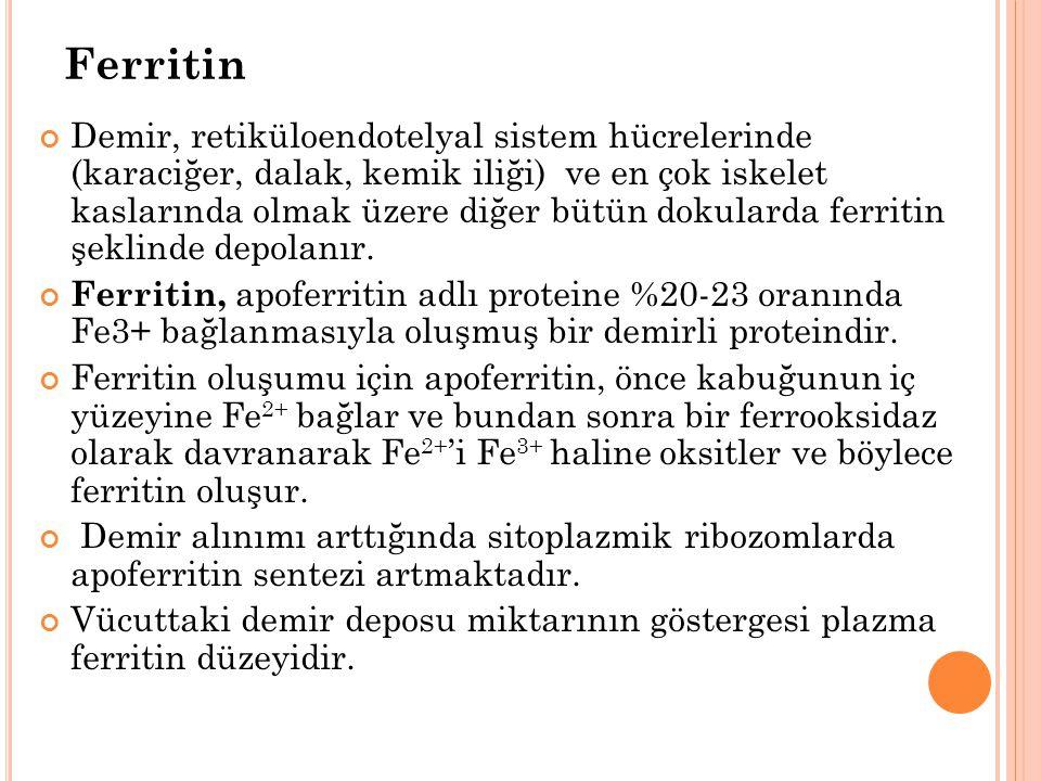 Ferritin