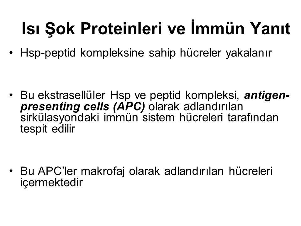 Isı Şok Proteinleri ve İmmün Yanıt