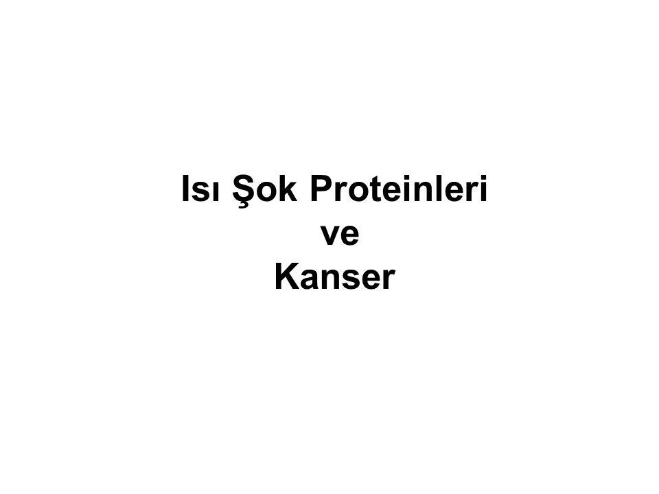Isı Şok Proteinleri ve Kanser