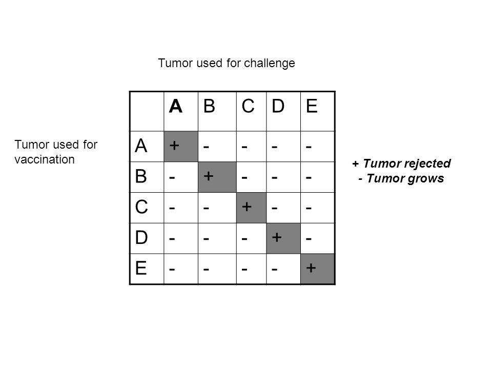 A B C D E + - Tumor used for challenge Tumor used for vaccination
