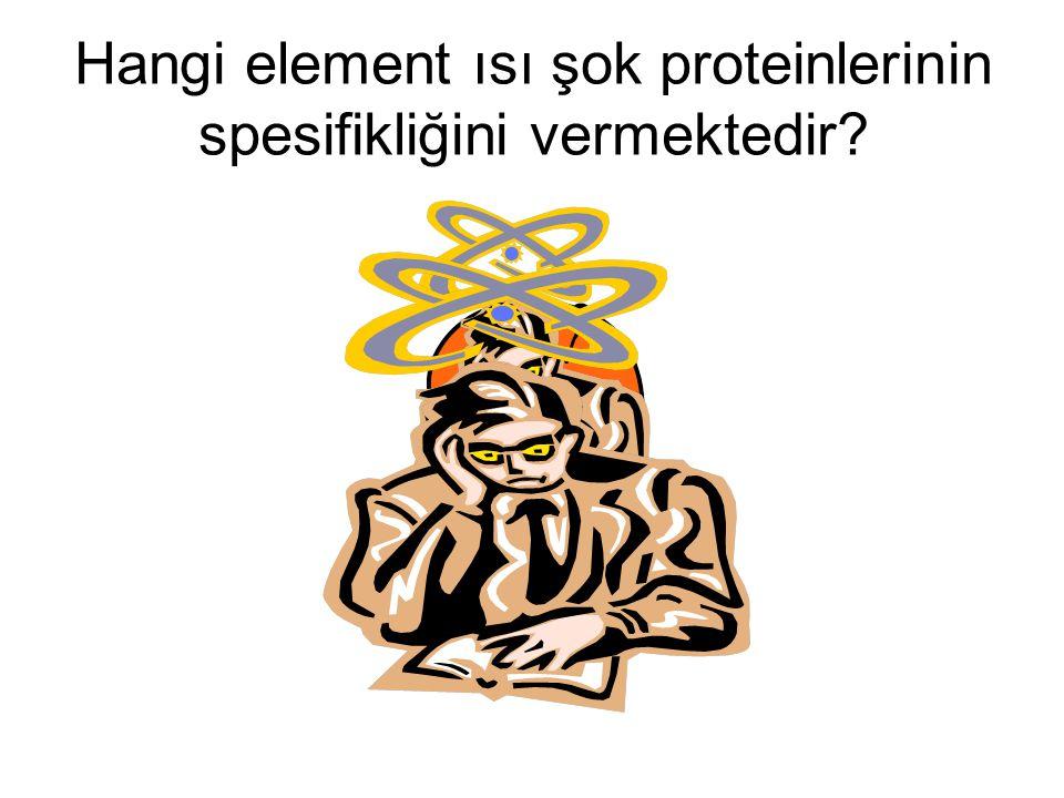 Hangi element ısı şok proteinlerinin spesifikliğini vermektedir