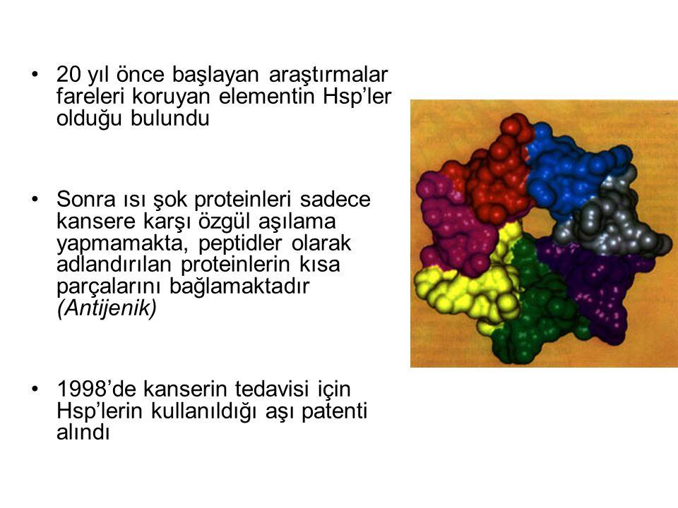 20 yıl önce başlayan araştırmalar fareleri koruyan elementin Hsp'ler olduğu bulundu