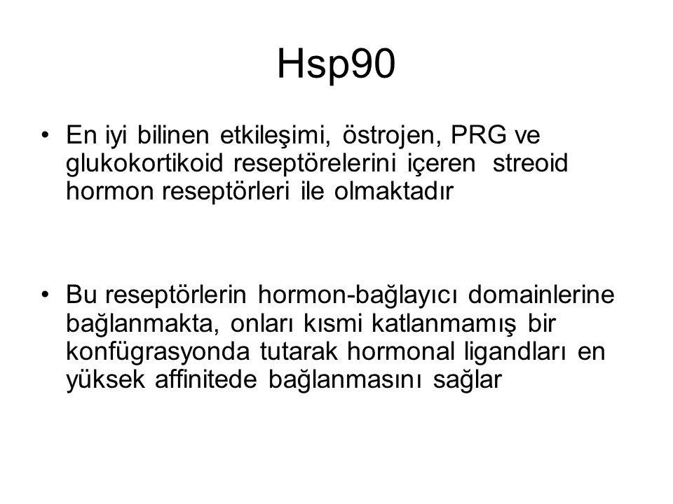 Hsp90 En iyi bilinen etkileşimi, östrojen, PRG ve glukokortikoid reseptörelerini içeren streoid hormon reseptörleri ile olmaktadır.