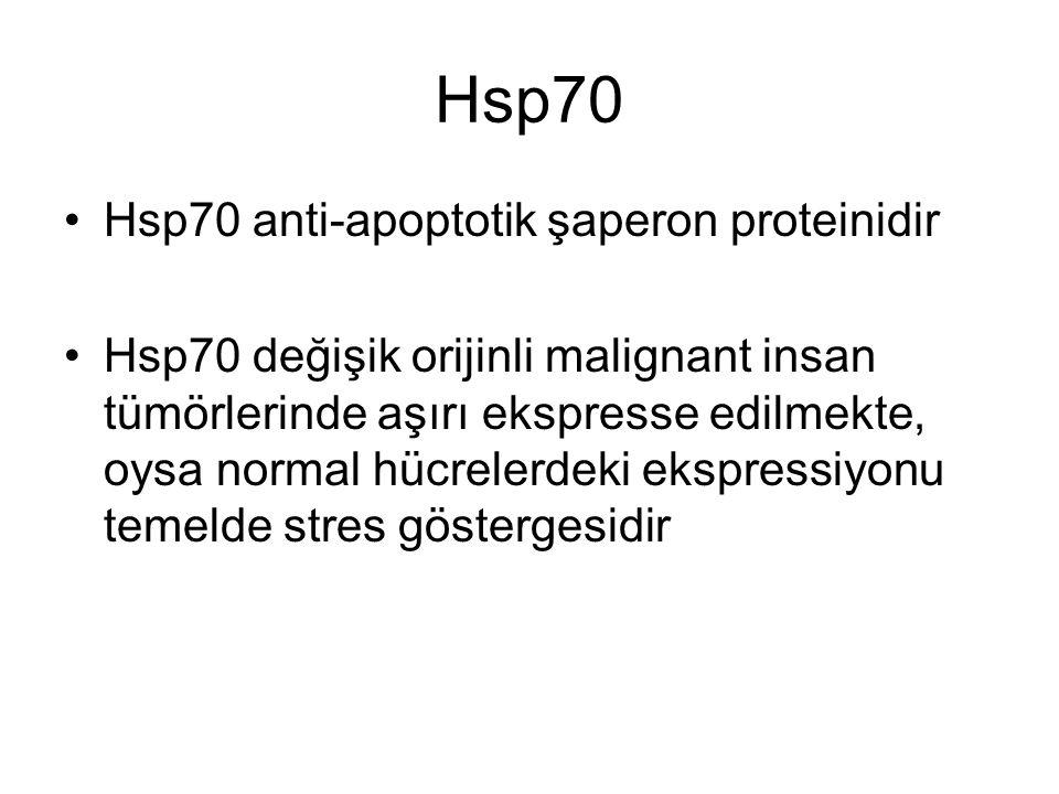 Hsp70 Hsp70 anti-apoptotik şaperon proteinidir