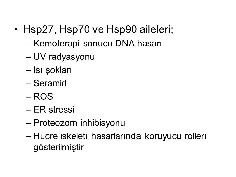 Hsp27, Hsp70 ve Hsp90 aileleri;