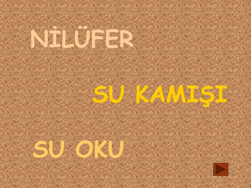 NİLÜFER SU KAMIŞI SU OKU