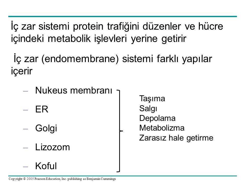 İç zar (endomembrane) sistemi farklı yapılar içerir