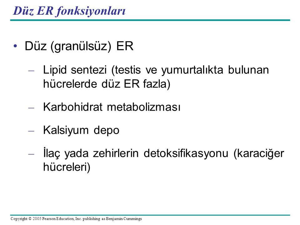 Düz ER fonksiyonları Düz (granülsüz) ER