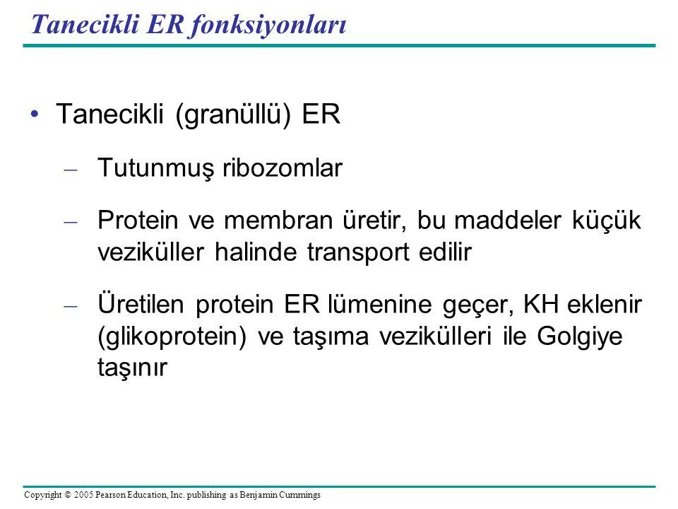 Tanecikli ER fonksiyonları