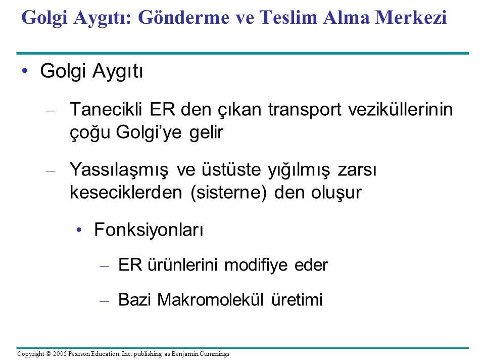 Golgi Aygıtı: Gönderme ve Teslim Alma Merkezi