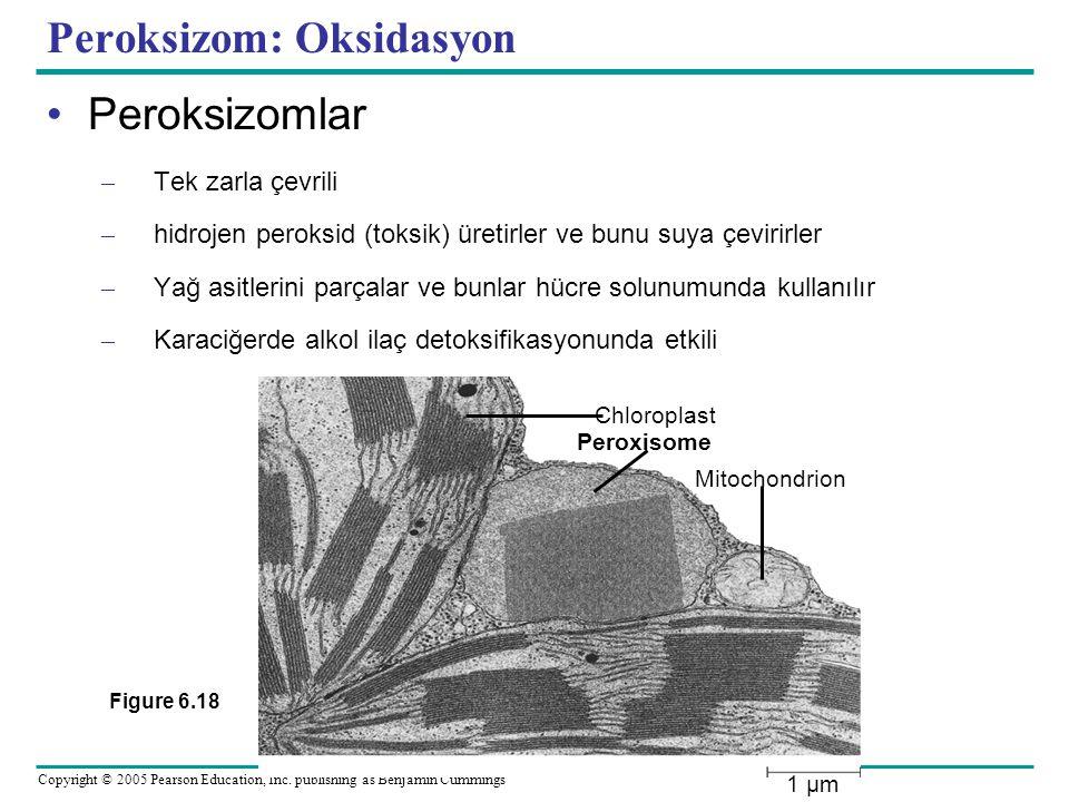 Peroksizom: Oksidasyon
