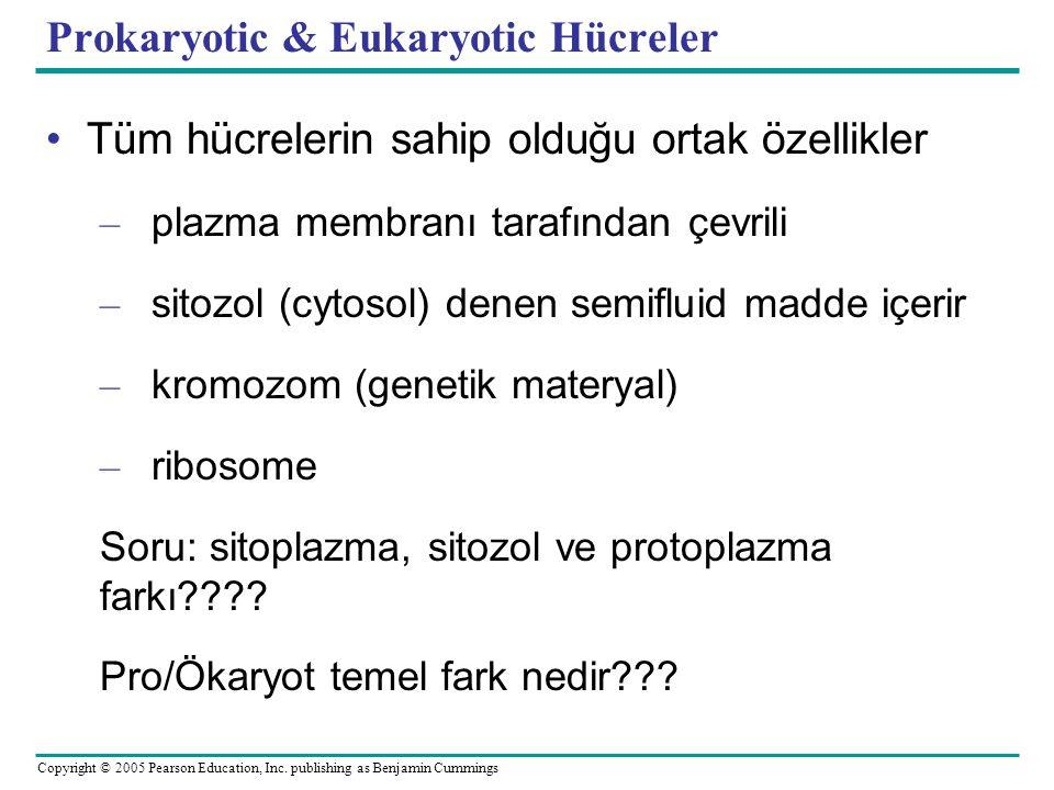 Prokaryotic & Eukaryotic Hücreler