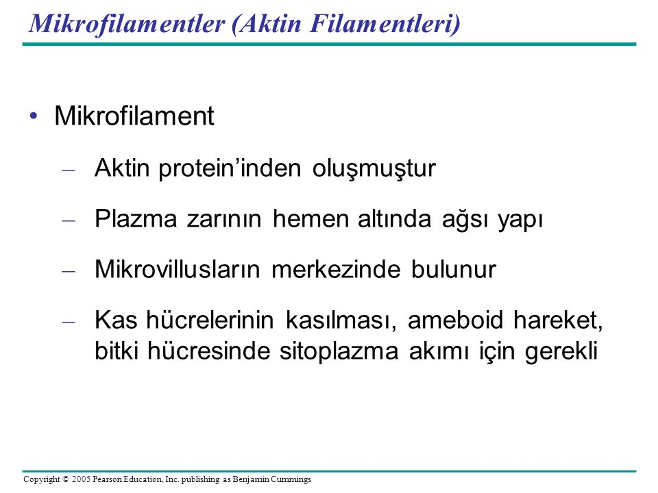 Mikrofilamentler (Aktin Filamentleri)