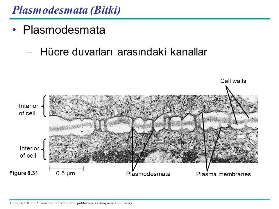 Plasmodesmata (Bitki)