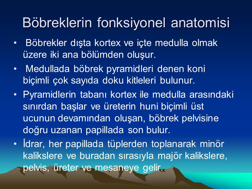Böbreklerin fonksiyonel anatomisi