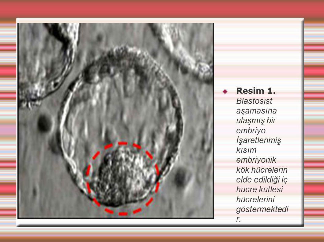 Resim 1. Blastosist aşamasına ulaşmış bir embriyo