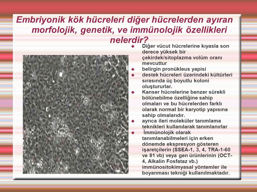 Embriyonik kök hücreleri diğer hücrelerden ayıran morfolojik, genetik, ve immünolojik özellikleri nelerdir