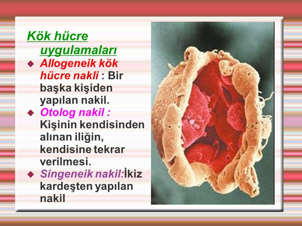 Kök hücre uygulamaları