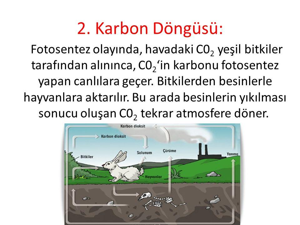 2. Karbon Döngüsü: