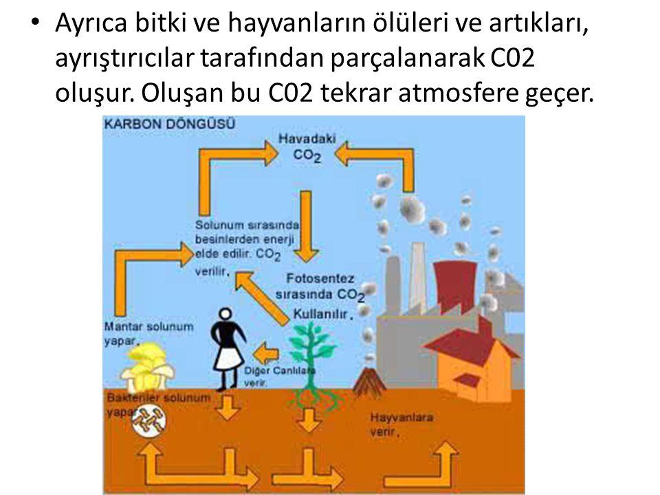 Ayrıca bitki ve hayvanların ölüleri ve artıkları, ayrıştırıcılar tarafından parçalanarak C02 oluşur.