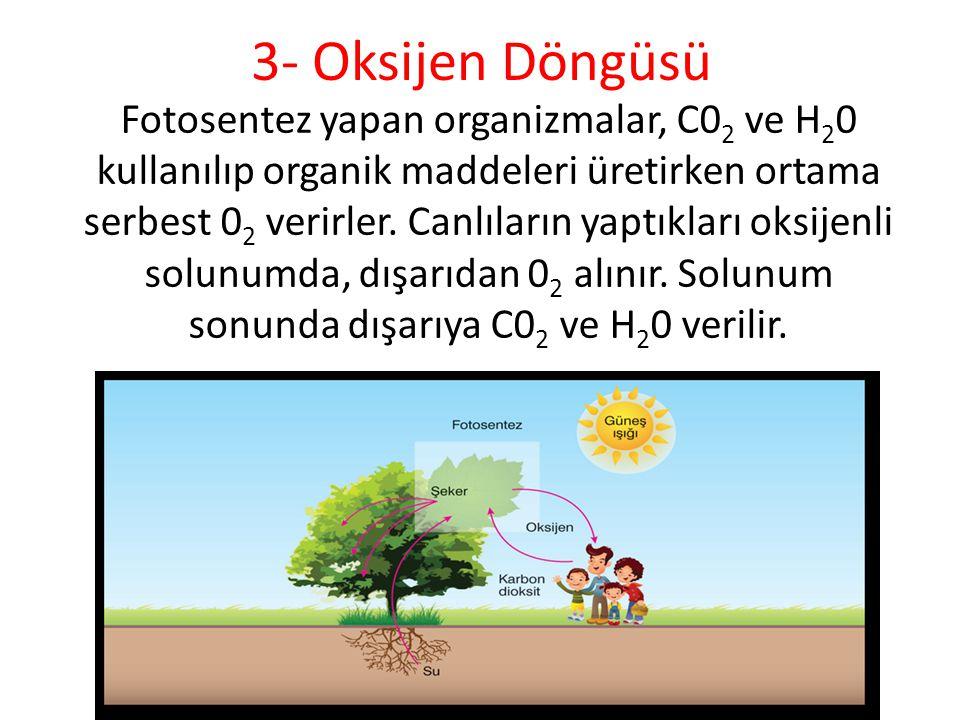 3- Oksijen Döngüsü