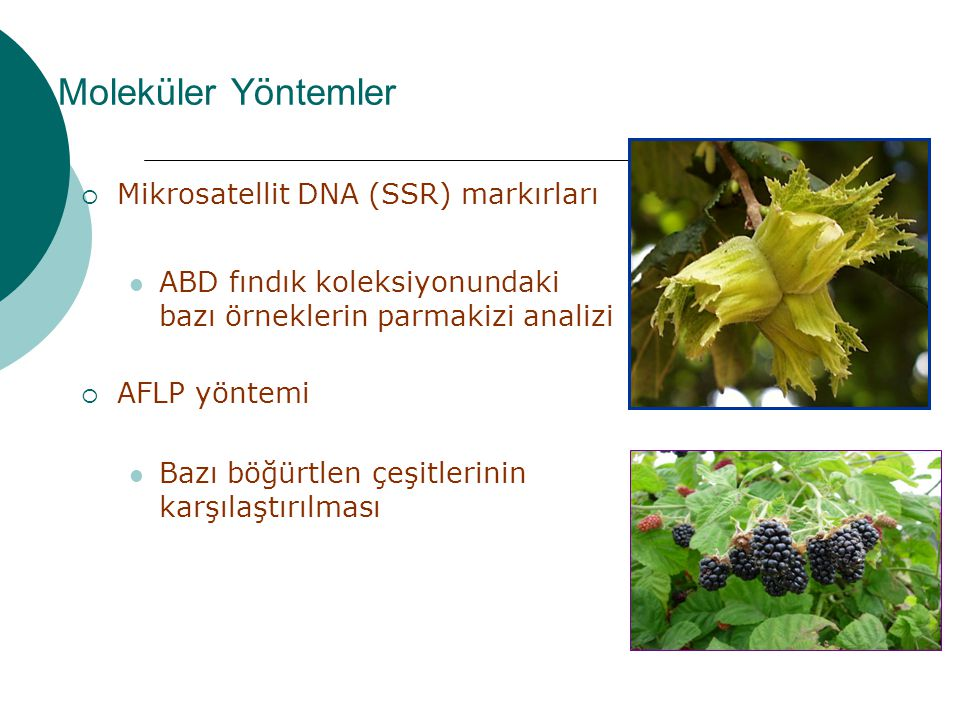 Moleküler Yöntemler Mikrosatellit DNA (SSR) markırları
