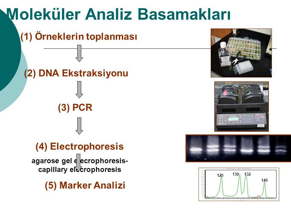 Moleküler Analiz Basamakları