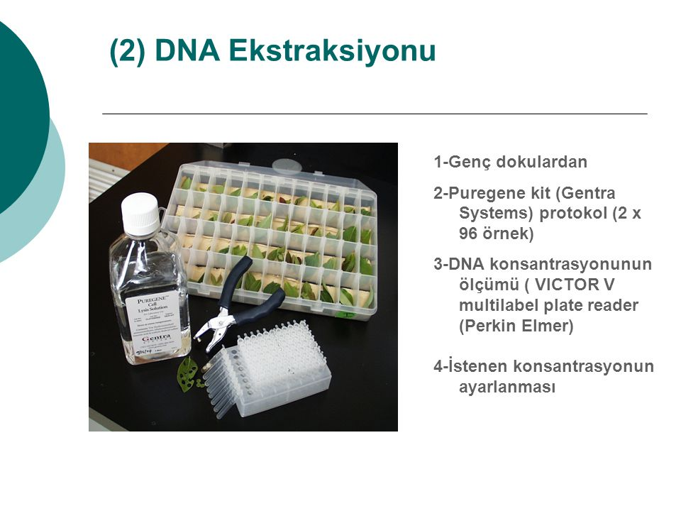 (2) DNA Ekstraksiyonu 1-Genç dokulardan