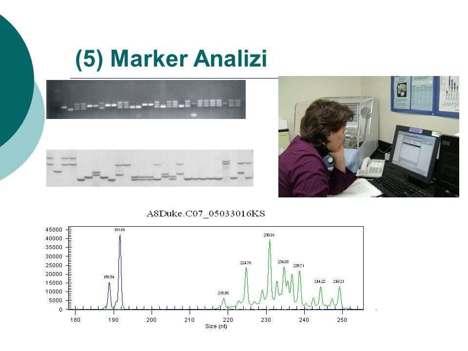 (5) Marker Analizi