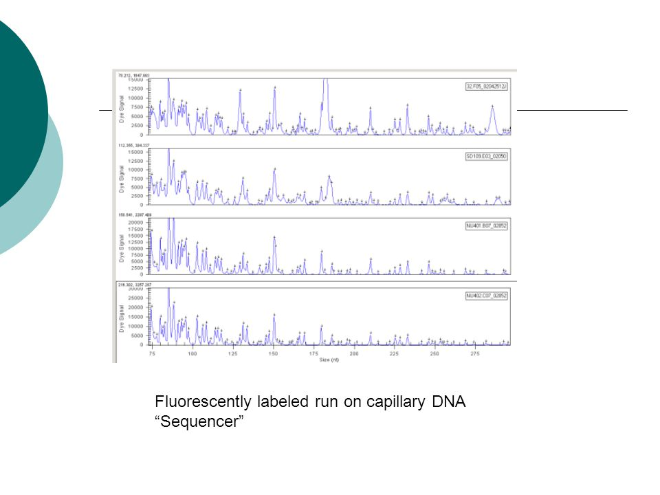 Fluorescently labeled run on capillary DNA Sequencer