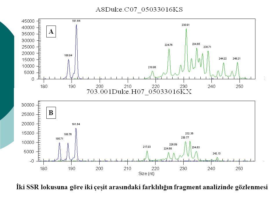 A B İki SSR lokusuna göre iki çeşit arasındaki farklılığın fragment analizinde gözlenmesi