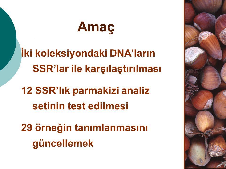 Amaç İki koleksiyondaki DNA'ların SSR'lar ile karşılaştırılması