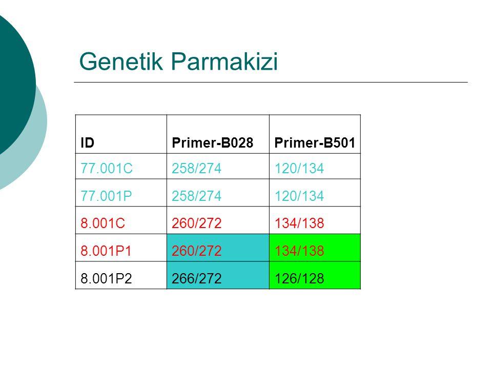 Genetik Parmakizi ID Primer-B028 Primer-B501 77.001C 258/274 120/134