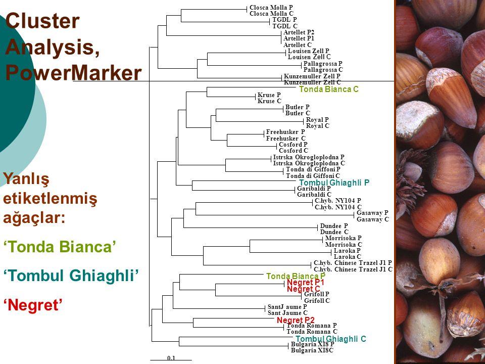 Cluster Analysis, PowerMarker