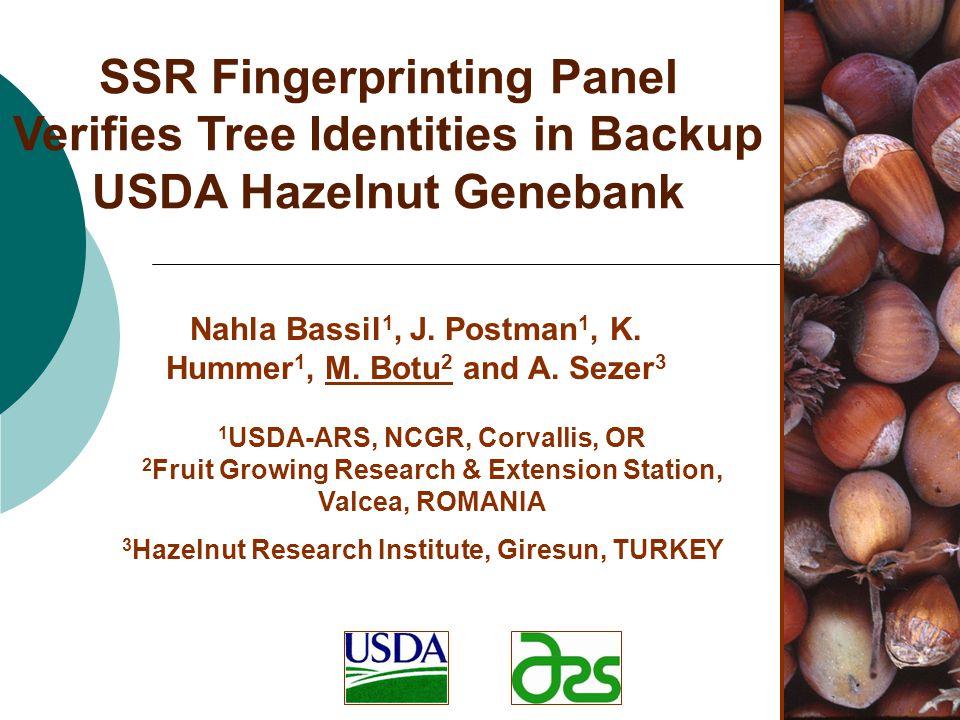 SSR Fingerprinting Panel Verifies Tree Identities in Backup USDA Hazelnut Genebank