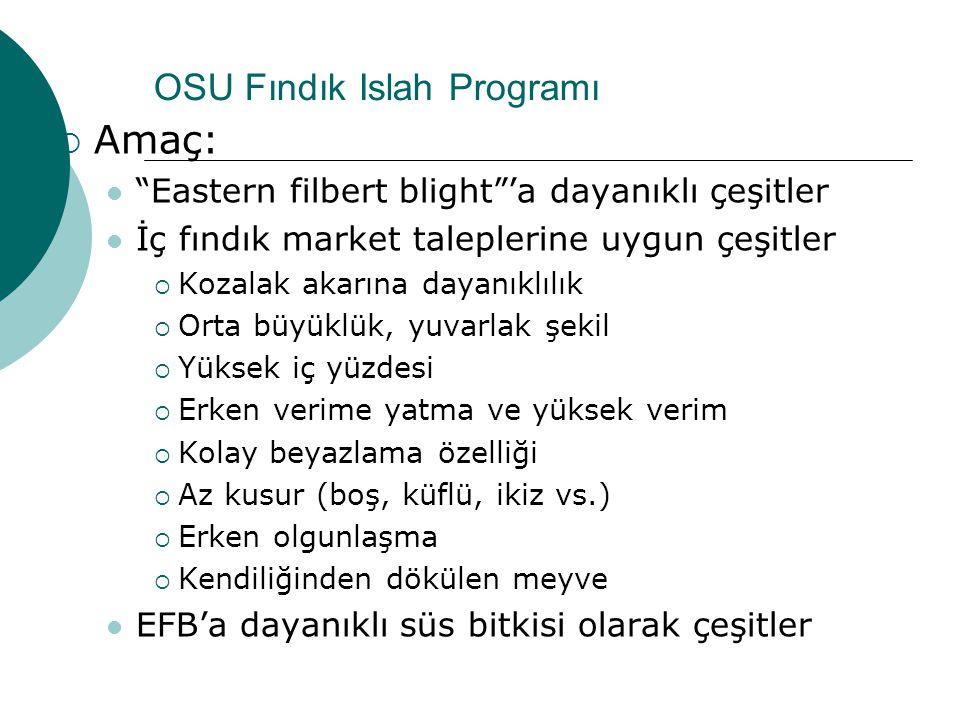 OSU Fındık Islah Programı