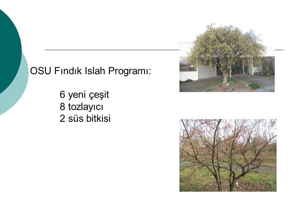 OSU Fındık Islah Programı: